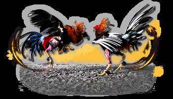 S128 Daftar Agen Sabung Ayam Ternama